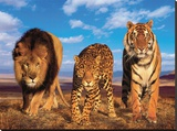 Three Big Cats Stretched Canvas Print