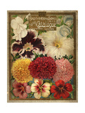 1897 Brotherton and Sons Spring Catalogue Giclee Print