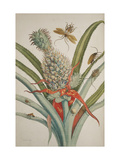 Smithsonian Libraries: The Transformation of Surinam Insects Giclee Print