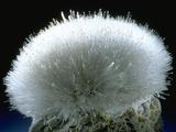 MineralCalendar: Mesolite. Poona, India Photographic Print