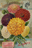 John Gardiner and Co. 1896: Dahlias Poster