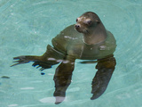 National Zoological Park: California Sea Lion Photographic Print