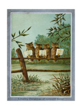 Center Warshaw Collection of Business Americana Series: A Quartette of 4 Owls on fence Reproduction procédé giclée
