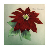 Christmas card with Poinsettia Merry Christmas, National Museum of American History Giclee Print