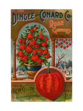 1897 Dingee and Conard Co. New Guide with the Chinese Lantern Plant Giclee Print