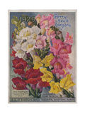 Giant Snapdragons from the Perry Seed Company Giclee Print