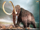 Woolly Mammoth Stretched Canvas Print