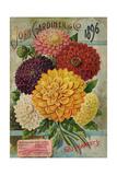 Seed Catalogues: John Gardiner and Co, Philadelphia, Pennsylvania. Seed Annual, 1896 Reproduction procédé giclée