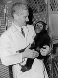 Dr. Albert B. Sabin Holding a Chimpanzee in Cincinnati Research Laboratory, 1956 Photo