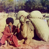 Central Asian Camel Driver Poses with a Camel Loaded with Packs Ca. 1910 Photo