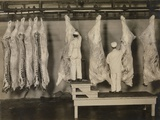Federal Meat Inspectors Examine Animal Carcasses in 1910 Photo