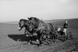 Two Large Work Horses Pull the Farmer and His Corn Seed Drill in Iowa, 1940s Photo