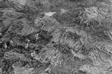 Aerial View of US Marines Advancing Through High Elephant Grass, Vietnam, Nov. 1968 Photo