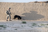 US Army Working Dog Team Conducts a Patrol in Afghanistan, April 21, 2011 Photographic Print