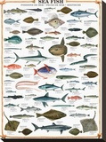Sea Fish Stretched Canvas Print