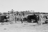 Harvesting Grain on a Jewish Kibbutz, in Palestine, Ca. 1920-39 Photo