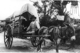 Mexican Man on a Donkey Cart Emigrating to the U.S. Via Nuevo Laredo, Ca. 1912 Photo