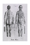 Human Figure with Acupuncture Points and Meridians Identified, 1825 Posters