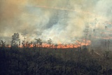 Burning Fields in the Florida Everglades Pollutes Highly Populated Areas in 1970s Posters