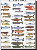 Salmon and Trout Stretched Canvas Print