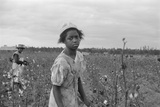 African American Girl Picking Cotton in Arkansas, Oct. 1935 Photo