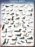 Coastal Birds Reproduction sur toile tendue