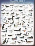 Coastal Birds Reproduction transférée sur toile