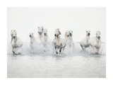 White Horses I Prints by Irene Suchocki