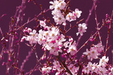 Spring Blossom - Purple Posters by Joseph Eta