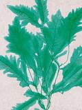 Emerald Sea III Prints by Henry Bradbury