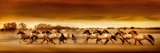 Argentine Horses Prints by Bobbie Goodrich