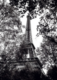 Paris Trees Prints by Joseph Eta