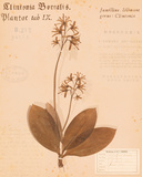 Clintonia Prints by H. T. Shores