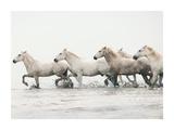 White Horses II Posters by Irene Suchocki