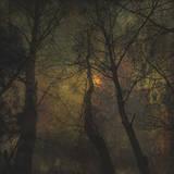 Dark Forest 1 Affiches par Jean-François Dupuis