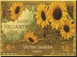 Savon Helianthis d'Or Stretched Canvas Print