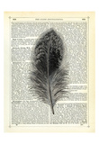 Feather Giclee Print by Marion Mcconaghie