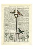 Garden Fork & Birds Giclee Print by Marion Mcconaghie