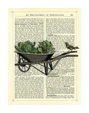 Wheelbarrow Lettuce & Bird Giclee Print by Marion Mcconaghie