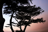 Cypress Silhouette I Photographic Print by Alan Hausenflock