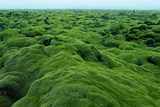 Field of Moss Photographic Print by Howard Ruby