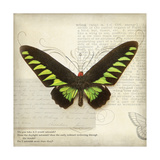 Butterflies Script VI Giclee Print by Amy Melious