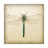 Dragonfly I Prints by Amy Melious