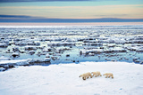 Mother and Cubs at the Shore Photographic Print by Howard Ruby