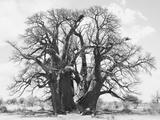 Great Tree Fotografisk tryk af Howard Ruby