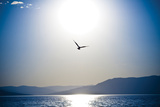 Take Flight Photographic Print by Erin Berzel