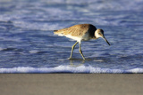 Sandpiper in the Surf IV Photographic Print by Alan Hausenflock