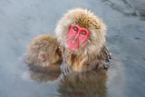 Mother Snow Monkey Photographic Print by Howard Ruby