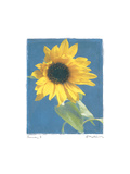 Summer I Premium Giclee Print by Amy Melious
