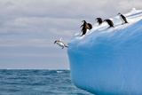 Penguins Off the Edge Photographic Print by Howard Ruby